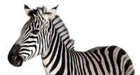 MEP-Expertise guide from Zebra
